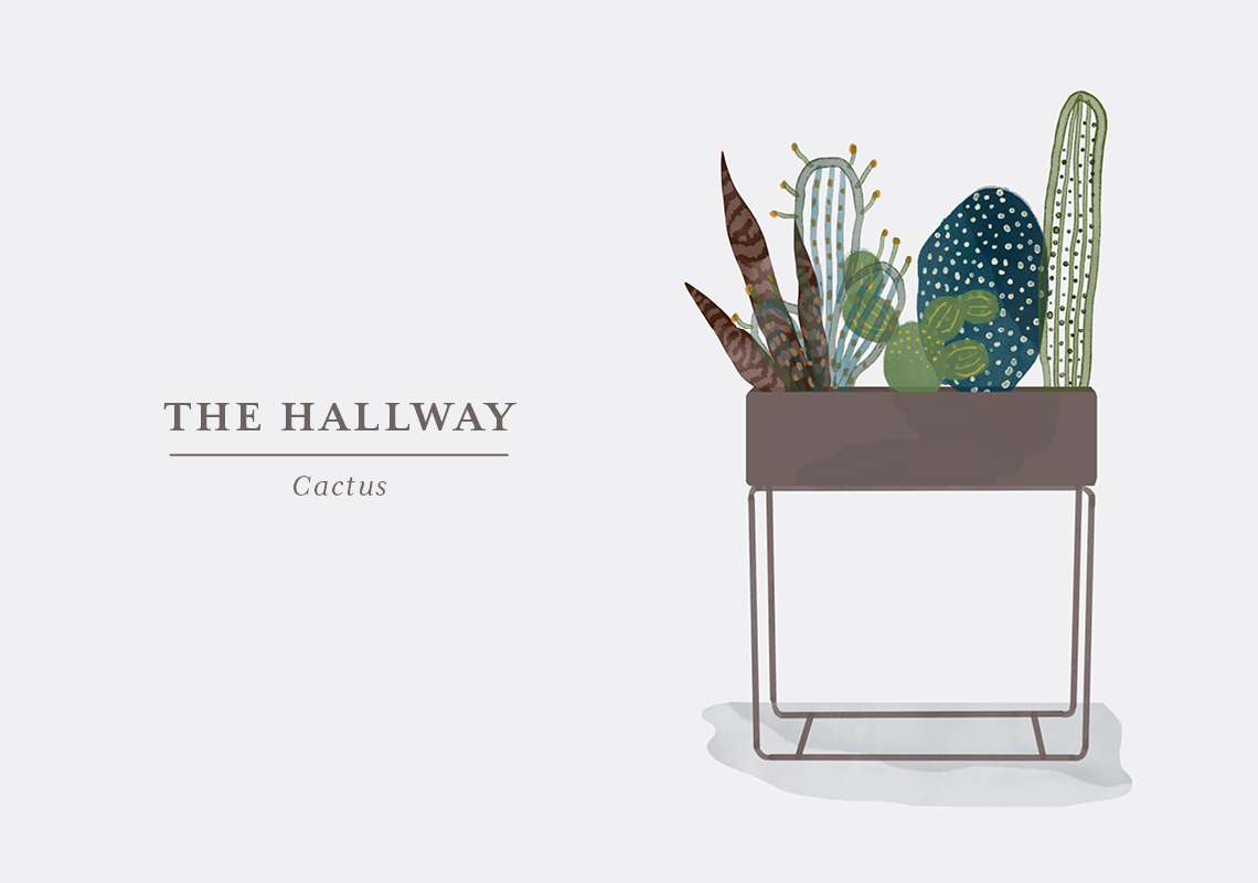 The cacti family is used to the desert, so if you have a dark hallway, this is a no go. But if you have indirect sunlight in your entrance from adjoining rooms, your cactus will do just fine. How much light, your cactus requires, depends on the species so make sure to look into that before choosing your new prickly friend. Although most cacti live in the desert, it is wrong to assume that they don't require any water. Cacti and succulents can store up water in their thick leaves, but they still need to be watered every now and then, as underwatering will cause shrivelling. Cacti grow during summer, and you should water them once a week. In the winter, you can reduce watering as it's their natural rest period. Make sure to place the cactus out of reach from the little children fingers, as they will poke, and the spikes can be difficult to remove.