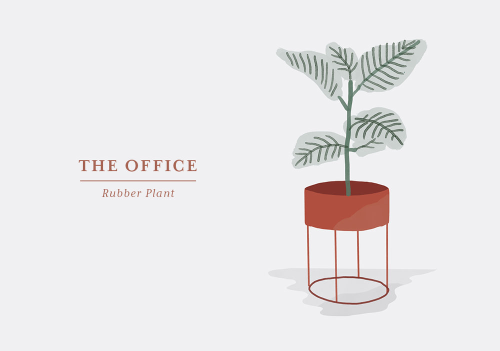 You work better when you feel great. Create the optimal conditions in your office by surrounding yourself with green plants. The Rubber Plant has large, dark green leaves and will grow big if you let it. It is easy to care for as long as you make sure it gets a good amount of bright and natural light – and avoid direct or low light, which will mean the end of the beautiful plant. It is used to moist conditions so make sure you don't place it too close to a heater or a drafty window and mist the leaves whenever you feel it needs a little extra.