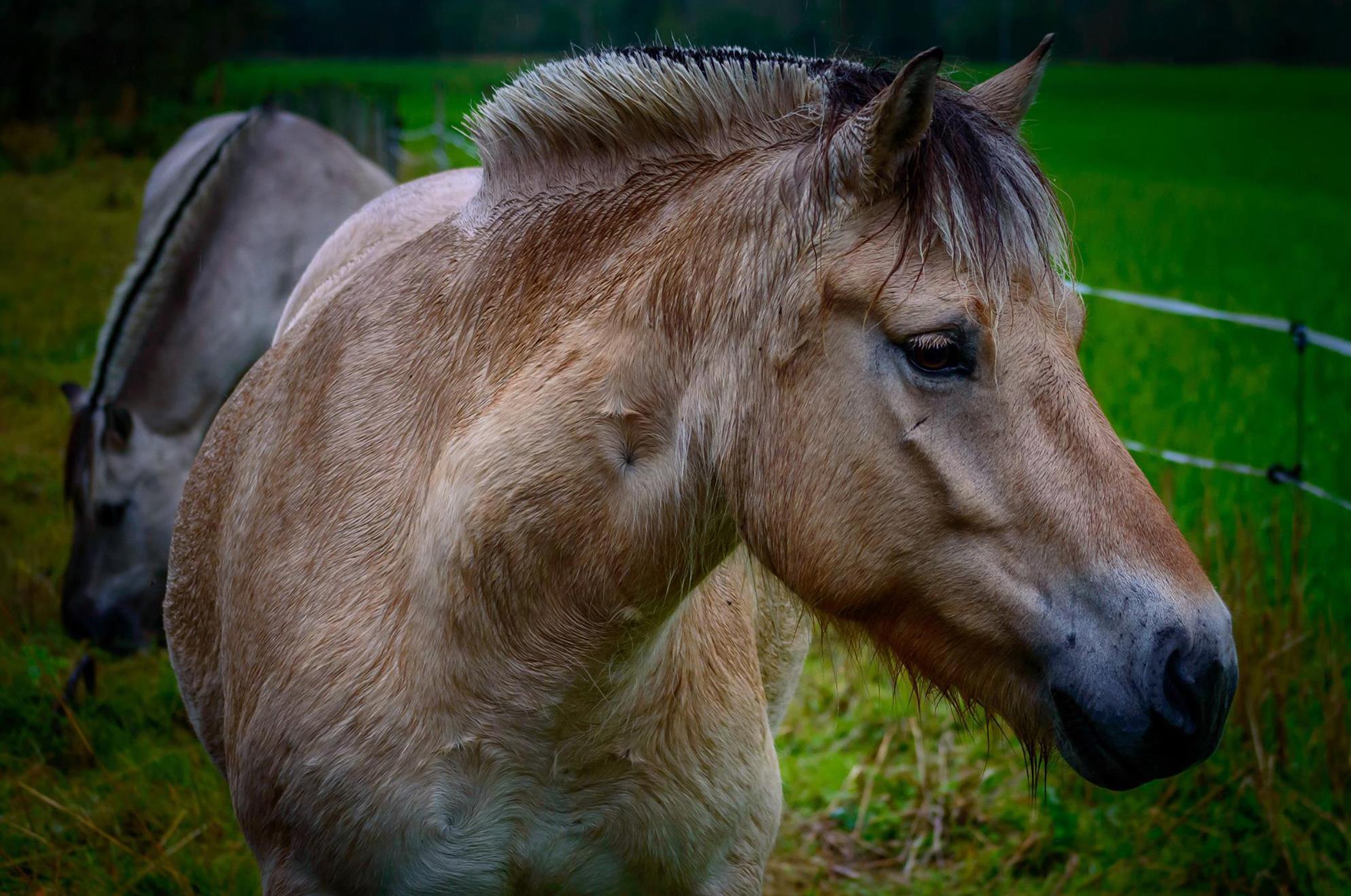 store_hest.jpg
