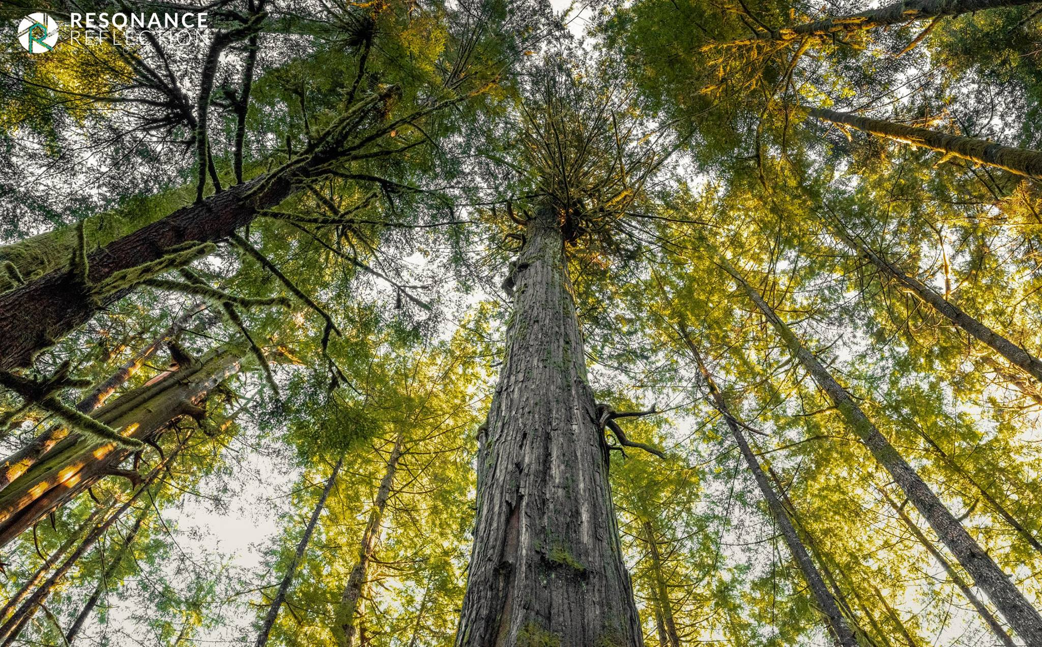 avatar grove 1.jpg