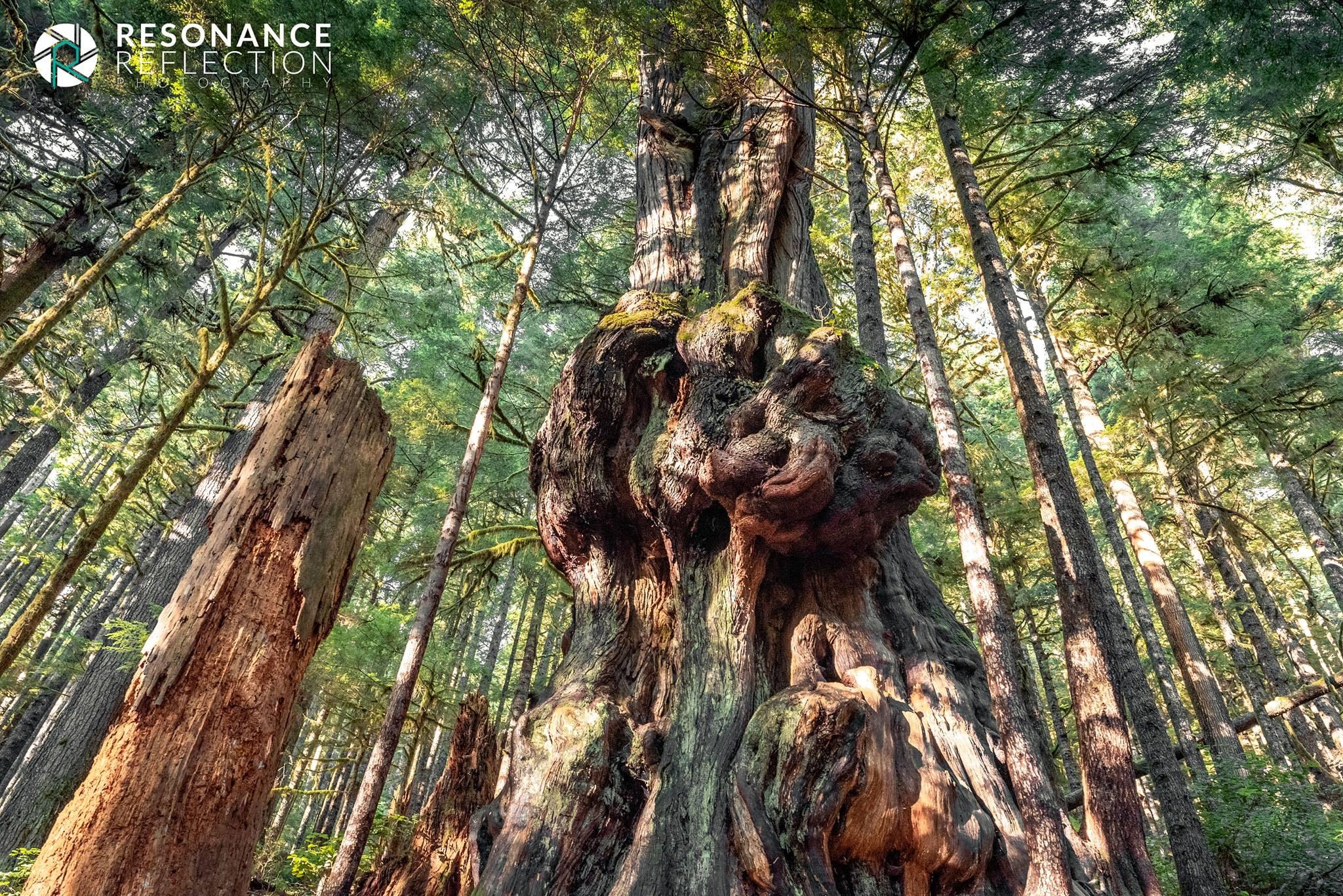 avatar grove 2.jpg