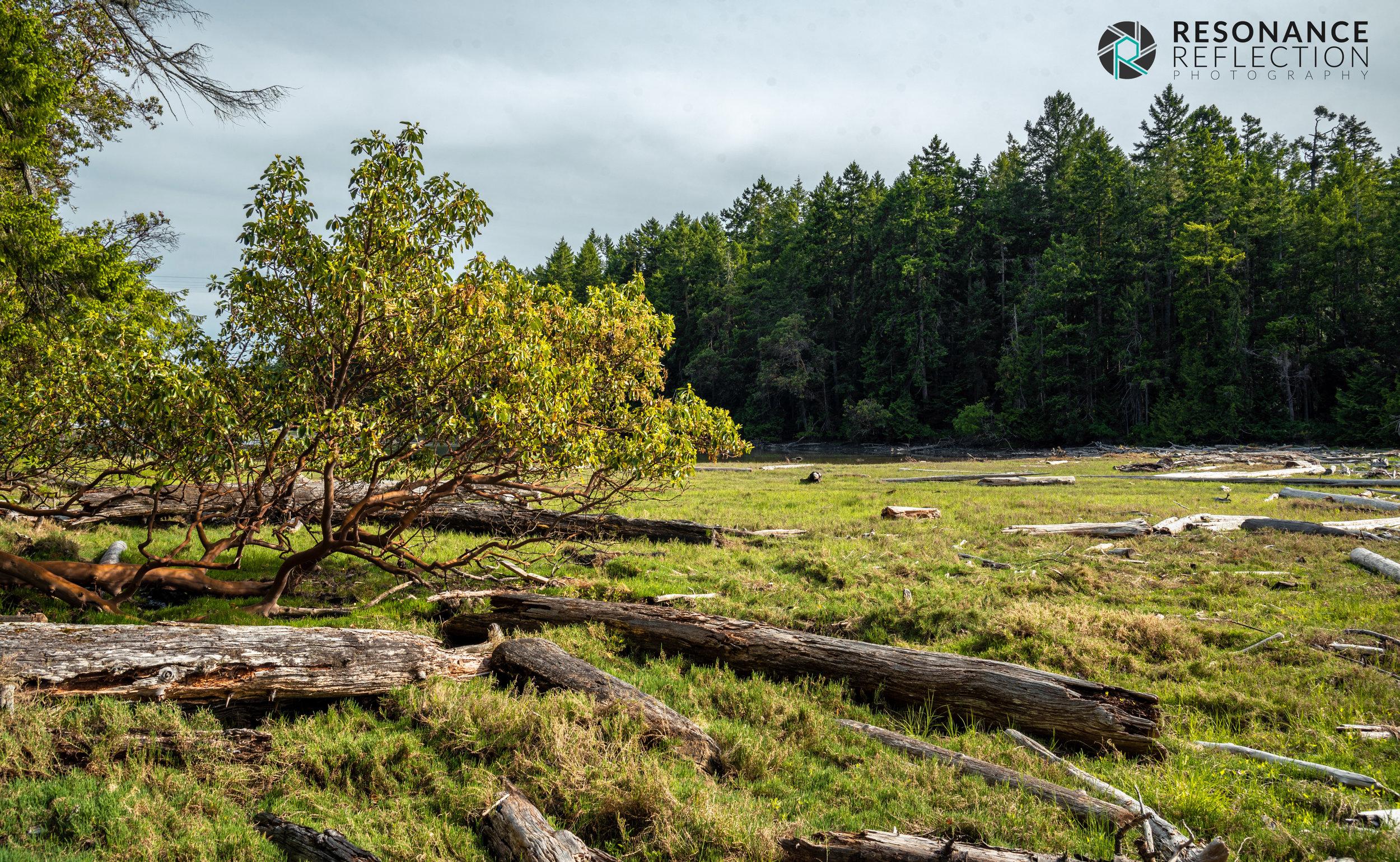 montague forest.jpg