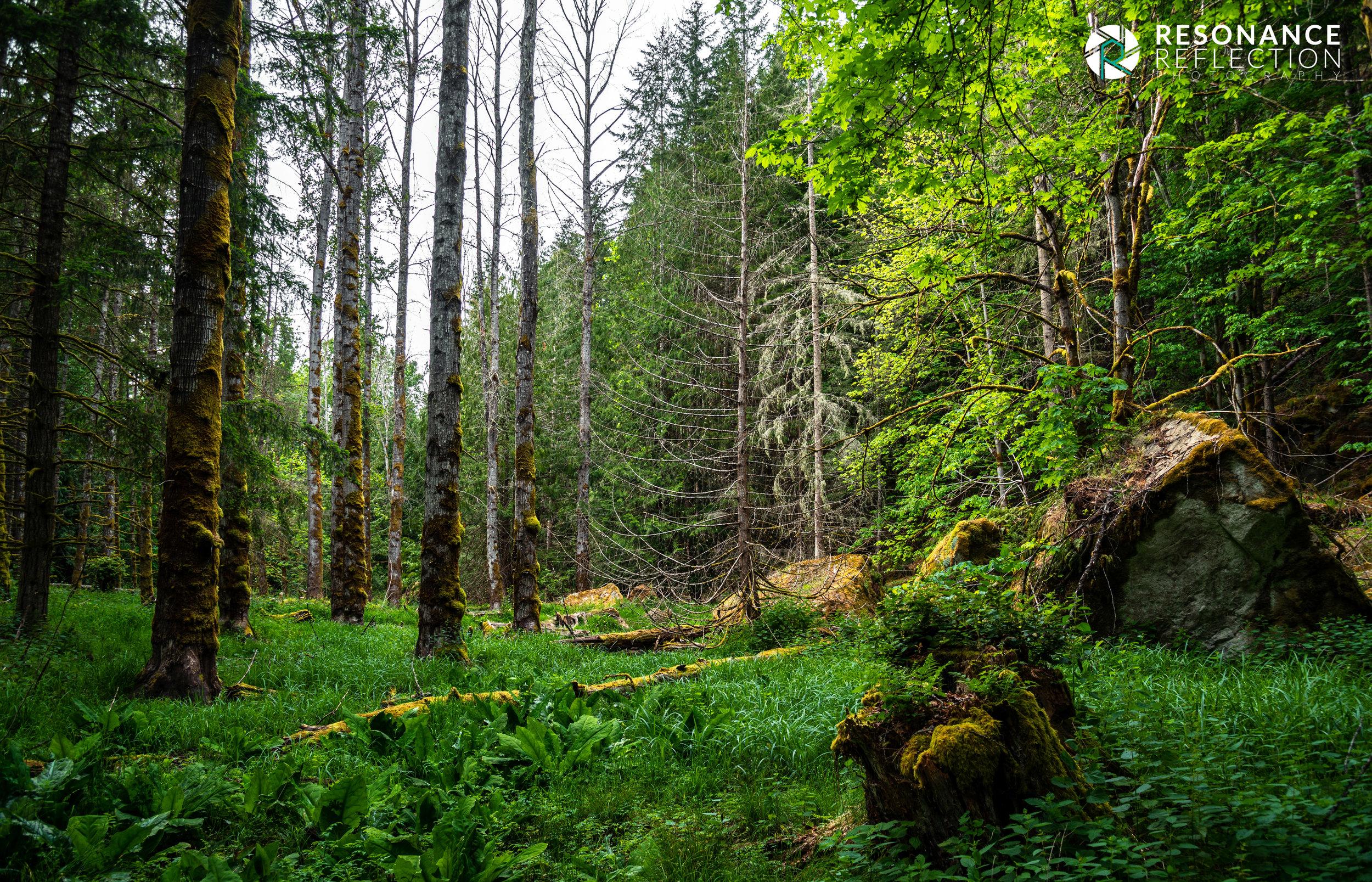woods galiano.jpg