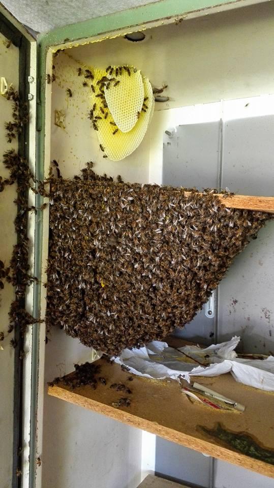 Cupboard swarm.jpg