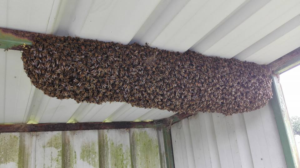 Bus shelter swarm.jpg