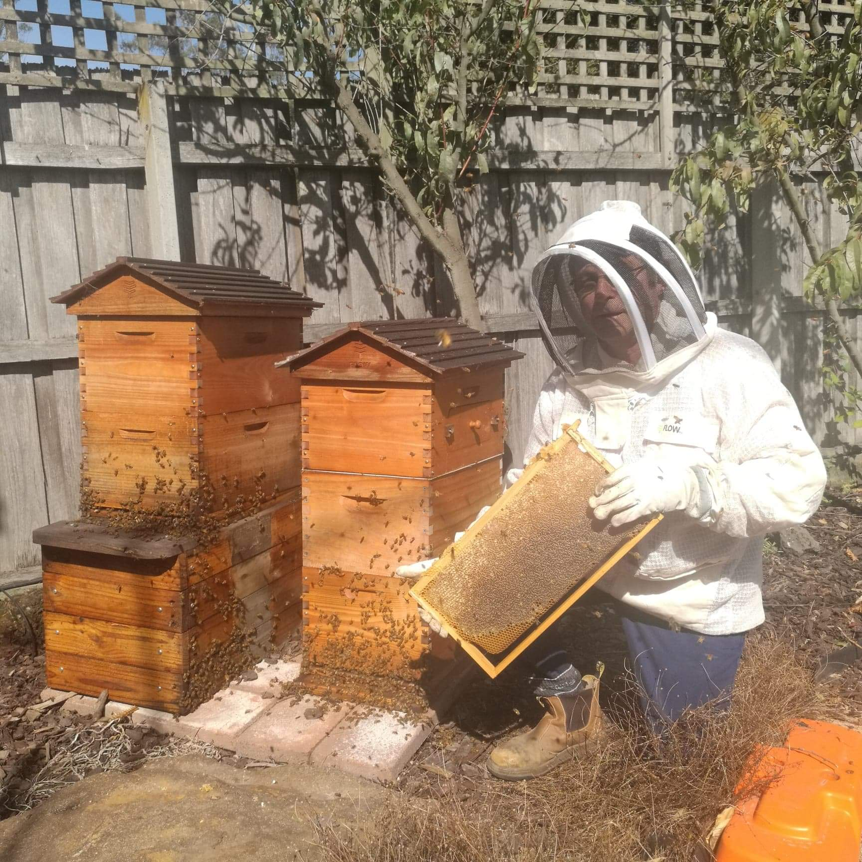 Lease Hives -