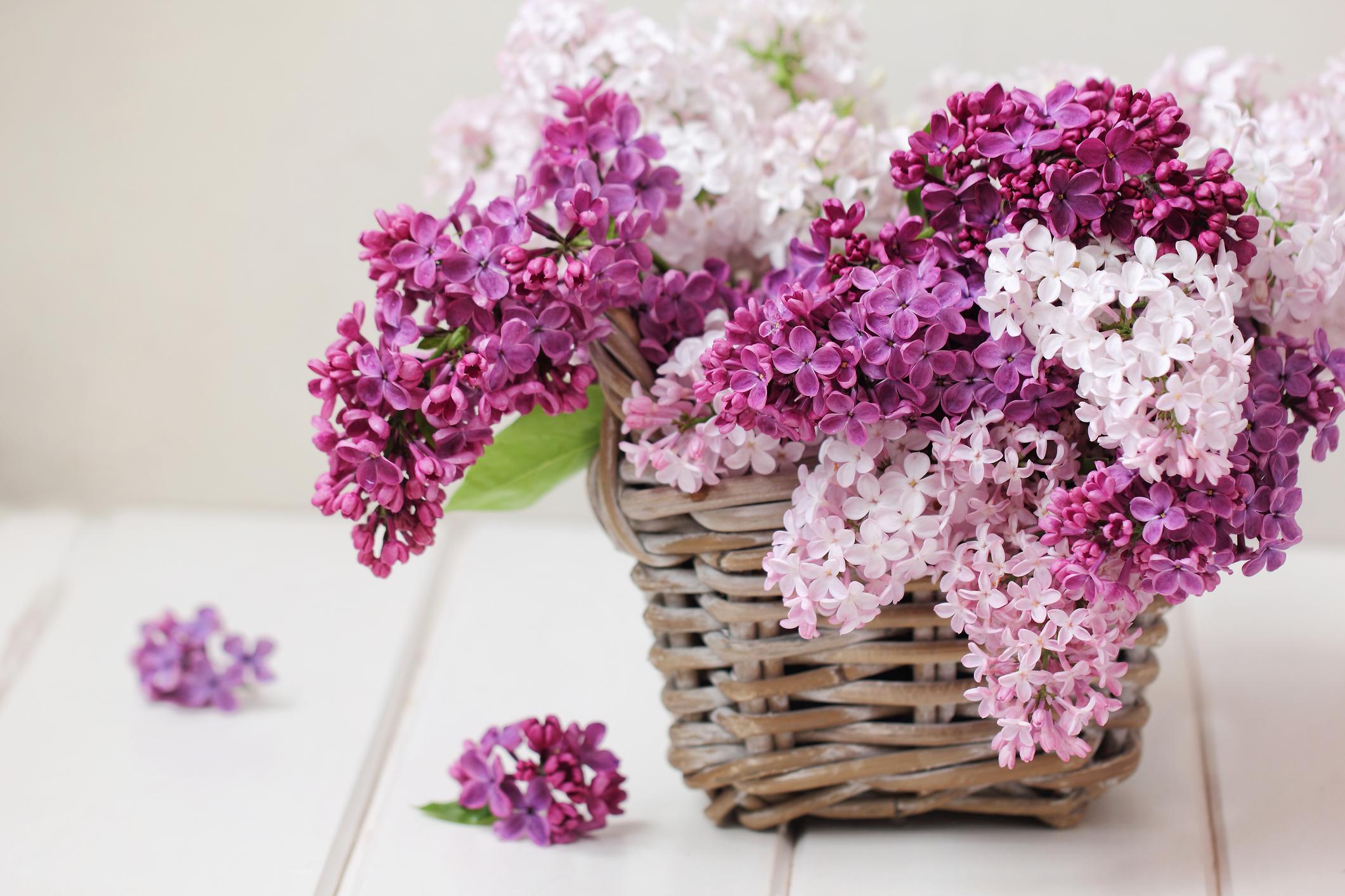 lilacbasket bouquet.jpg