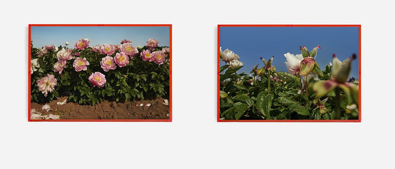 for web west coast frames.jpg