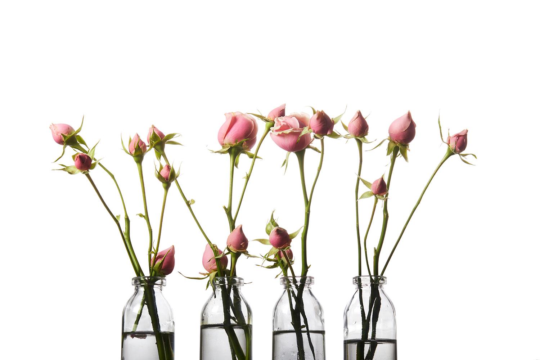 Rosebuds_OndreaBarbe.jpg
