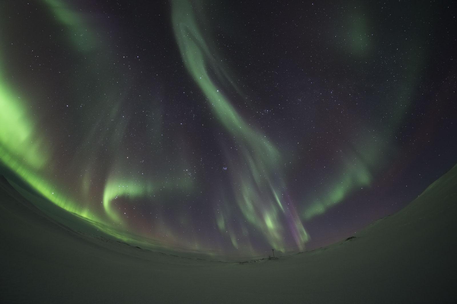 aurorafishy-1.jpg