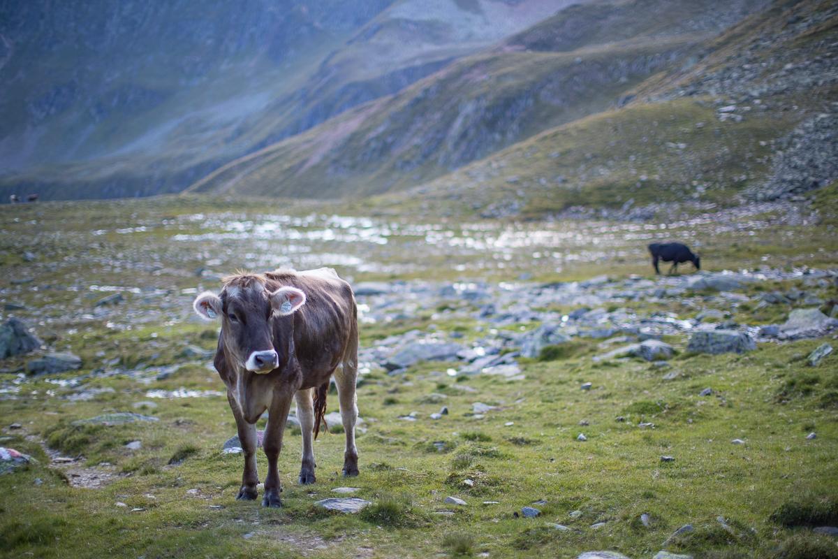 Tyrolean brown