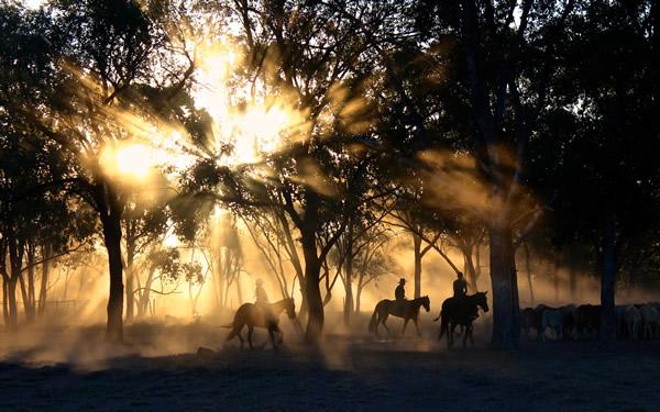 group on horseback at sunset