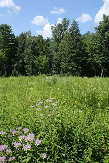 The native meadow was alive and well, not only botanically but also...