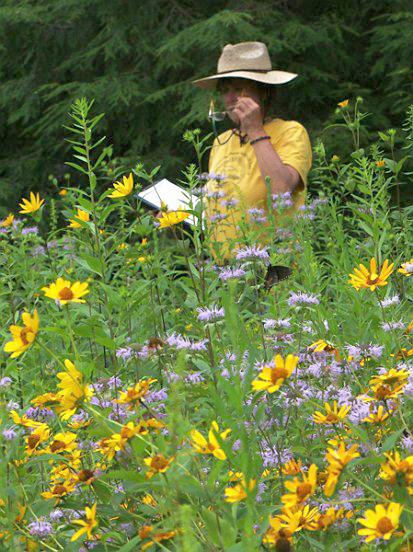 botanistically! (Also note the entomological representative.)