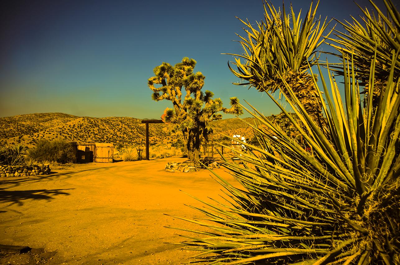 DesertSolace_original.jpg