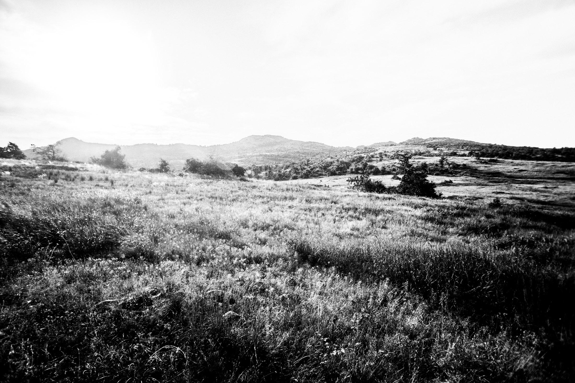 Mount Mitchell B&W 08-07-16 (7 of 35).jpg