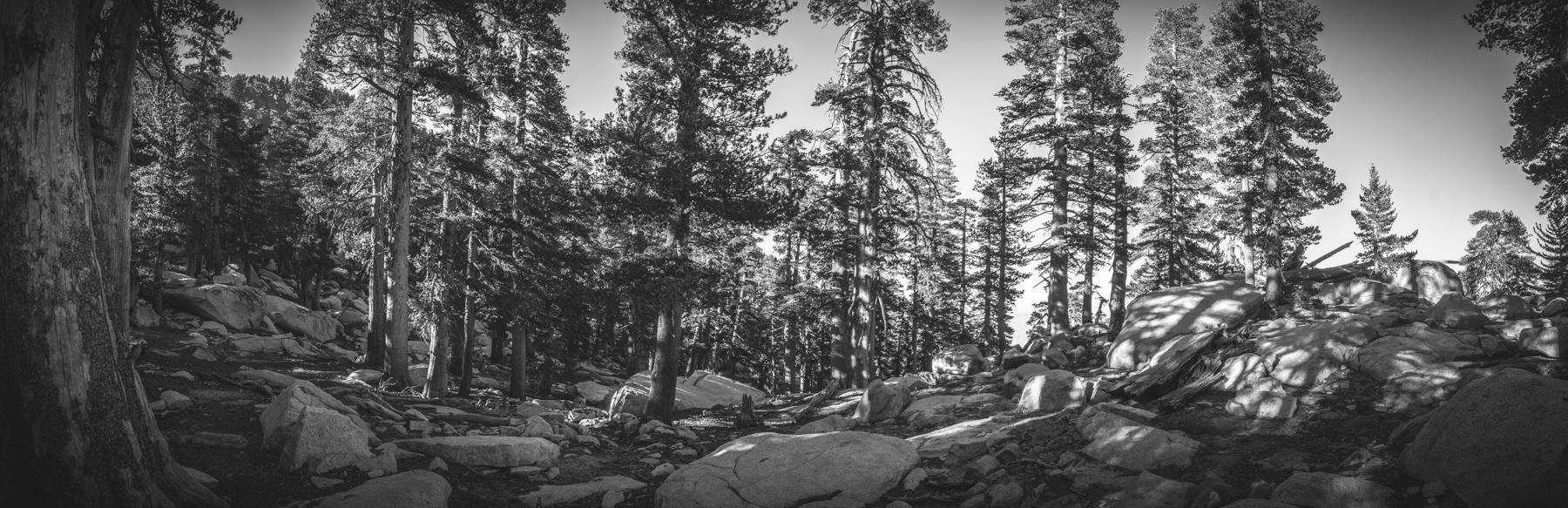 2017-07-02 San Jacinto Peak B (22 of 30).jpg