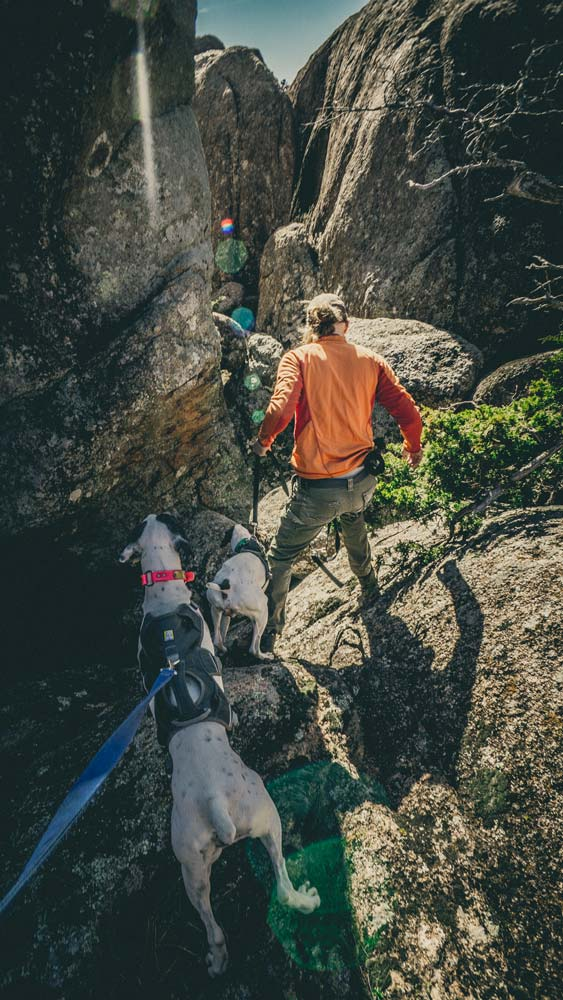 dogshiking-dogswhohike-toddeclark-nature-adventure-mountains-mountain-outdoors-hike-wanderlust-beautiful-naturelovers-love-view-outdoor-neverstopexploring-backpacking-climbing-wilderness-optoutside-keepitwild-1.jpg