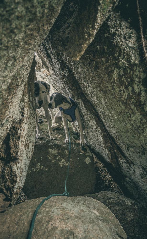 womenwhohike-dogshiking-toddeclark-nature-adventure-mountains-mountain-outdoors-hike-wanderlust-beautiful-naturelovers-love-view-outdoor-neverstopexploring-backpacking-climbing-wilderness-optoutside-keepitwild-13.jpg