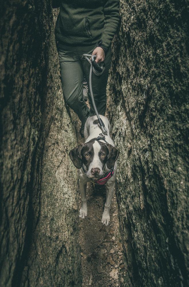 womenwhohike-dogshiking-toddeclark-nature-adventure-mountains-mountain-outdoors-hike-wanderlust-beautiful-naturelovers-love-view-outdoor-neverstopexploring-backpacking-climbing-wilderness-optoutside-keepitwild-18.jpg