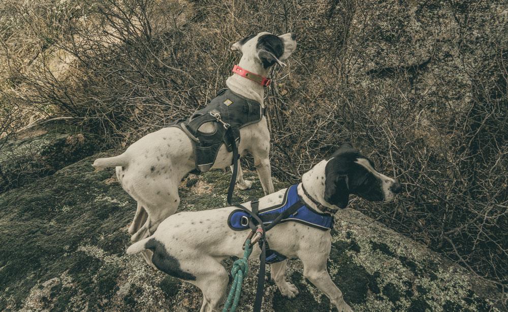 womenwhohike-dogshiking-toddeclark-nature-adventure-mountains-mountain-outdoors-hike-wanderlust-beautiful-naturelovers-love-view-outdoor-neverstopexploring-backpacking-climbing-wilderness-optoutside-keepitwild-32.jpg