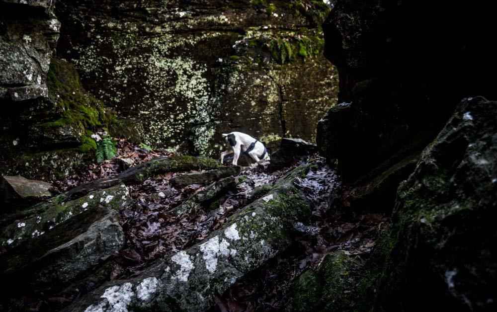 Womenwhoexplore-womenwhohike-dogshiking-dogswhohike-toddeclark-nature-adventure-mountains-mountain-outdoors-hike-wanderlust-beautiful-naturelovers-view-outdoor-neverstopexploring-backpacking-wilderness-optoutside-keepitwild-13.jpg