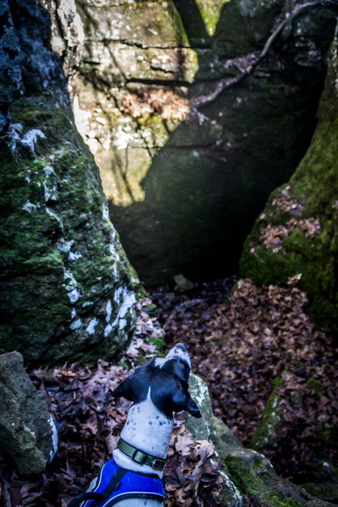 Womenwhoexplore-womenwhohike-dogshiking-dogswhohike-toddeclark-nature-adventure-mountains-mountain-outdoors-hike-wanderlust-beautiful-naturelovers-view-outdoor-neverstopexploring-backpacking-wilderness-optoutside-keepitwild-16.jpg