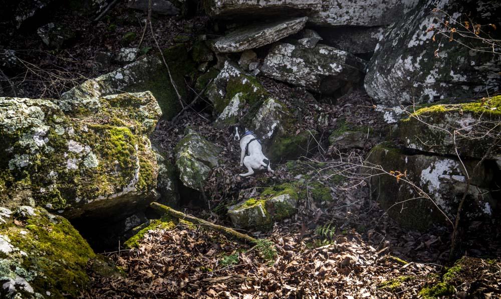 Womenwhoexplore-womenwhohike-dogshiking-dogswhohike-toddeclark-nature-adventure-mountains-mountain-outdoors-hike-wanderlust-beautiful-naturelovers-view-outdoor-neverstopexploring-backpacking-wilderness-optoutside-keepitwild-23.jpg