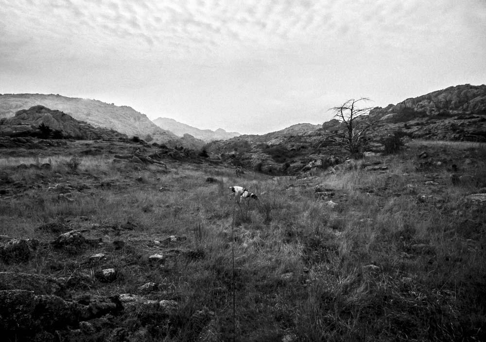 Womenwhoexplore-womenwhohike-dogshiking-dogswhohike-toddeclark-nature-adventure-mountains-mountain-outdoors-hike-wanderlust-beautiful-naturelovers-view-outdoor-neverstopexploring-backpacking-wilderness-optoutside-keepitwild-2.jpg