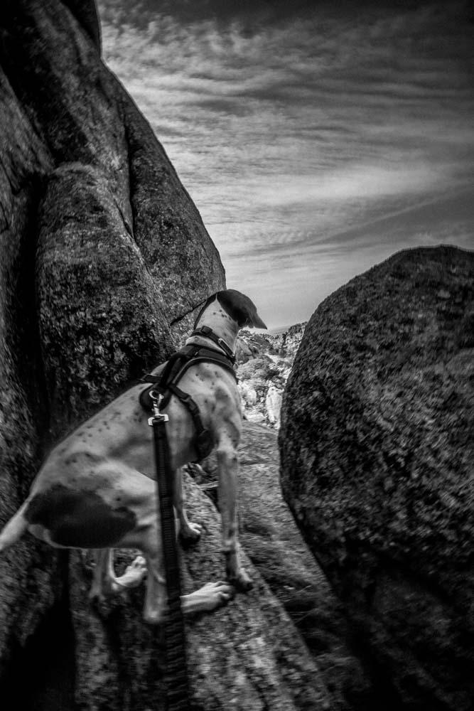 Womenwhoexplore-womenwhohike-dogshiking-dogswhohike-toddeclark-nature-adventure-mountains-mountain-outdoors-hike-wanderlust-beautiful-naturelovers-view-outdoor-neverstopexploring-backpacking-wilderness-optoutside-keepitwild-8.jpg