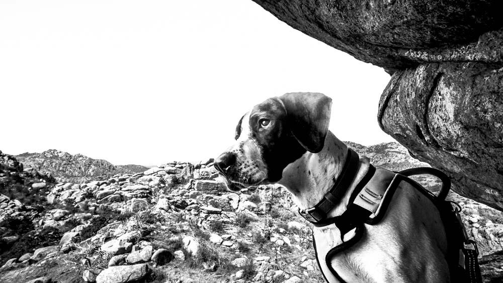Womenwhoexplore-womenwhohike-dogshiking-dogswhohike-toddeclark-nature-adventure-mountains-mountain-outdoors-hike-wanderlust-beautiful-naturelovers-view-outdoor-neverstopexploring-backpacking-wilderness-optoutside-keepitwild-18.jpg