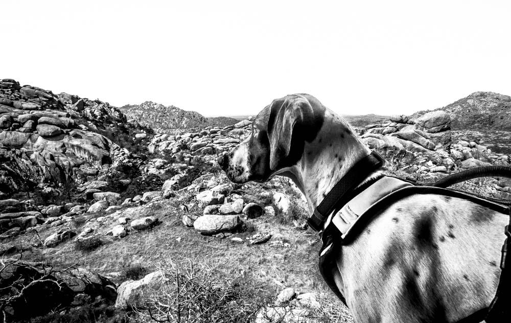 Womenwhoexplore-womenwhohike-dogshiking-dogswhohike-toddeclark-nature-adventure-mountains-mountain-outdoors-hike-wanderlust-beautiful-naturelovers-view-outdoor-neverstopexploring-backpacking-wilderness-optoutside-keepitwild-19.jpg
