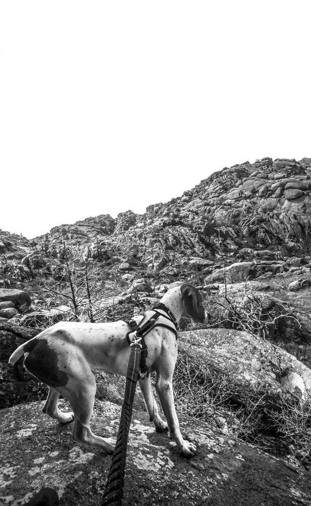 Womenwhoexplore-womenwhohike-dogshiking-dogswhohike-toddeclark-nature-adventure-mountains-mountain-outdoors-hike-wanderlust-beautiful-naturelovers-view-outdoor-neverstopexploring-backpacking-wilderness-optoutside-keepitwild-21.jpg