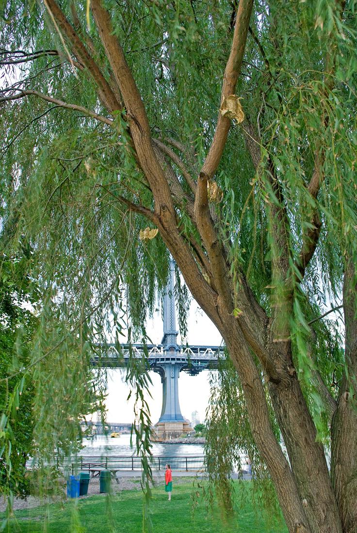 Gilded Phytophillic Bats (Brooklyn Bridge Park)