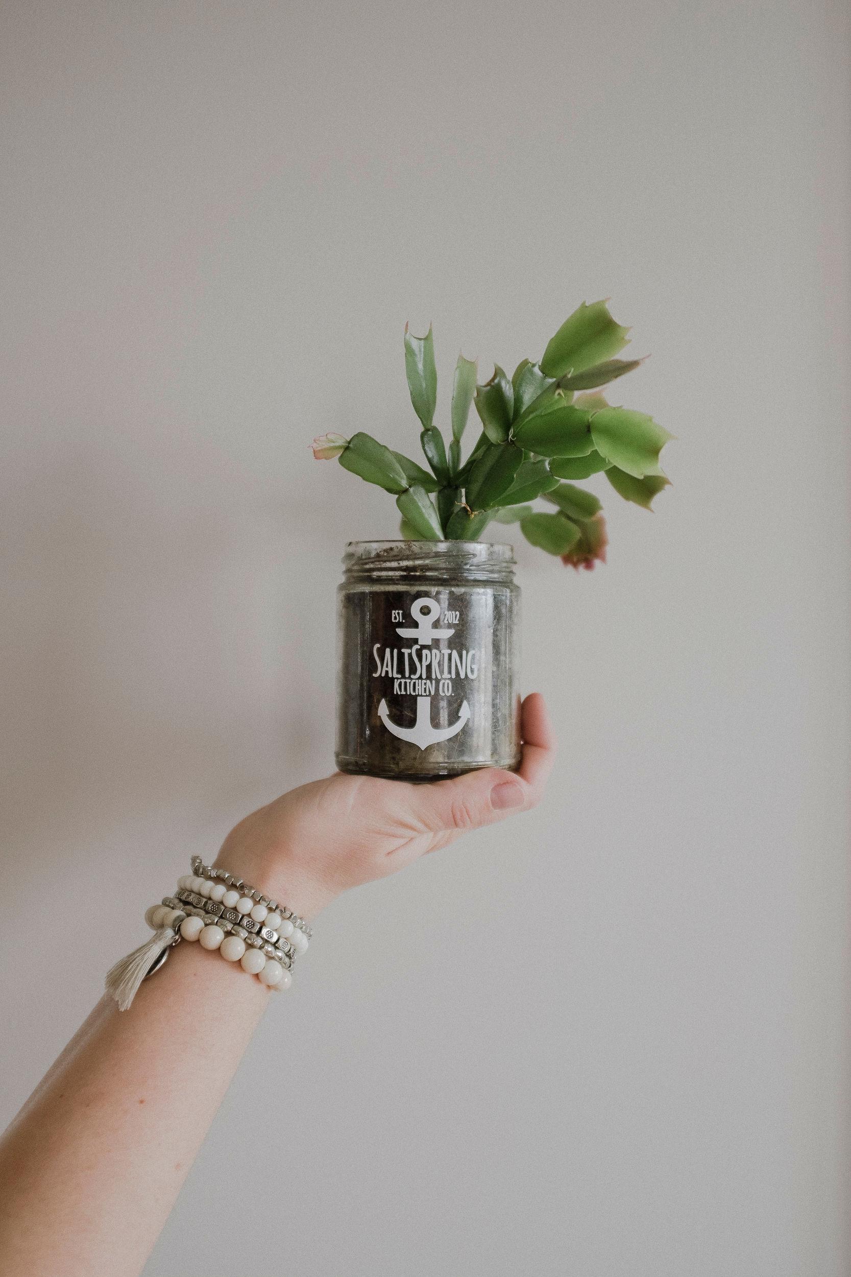 Karmen re-purposes a  Salt Spring Kitchen Co.  Jar as a planter pot.