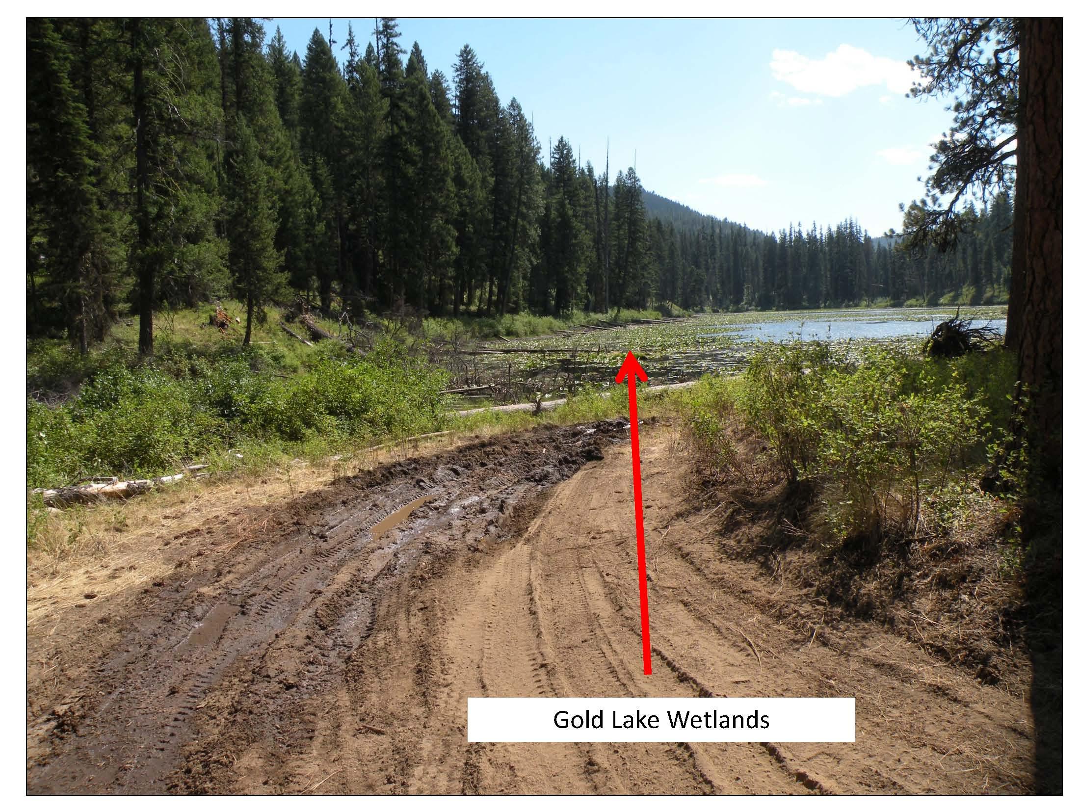 Drafting from Gold Lake Wetland_pics1_Page_1.jpg