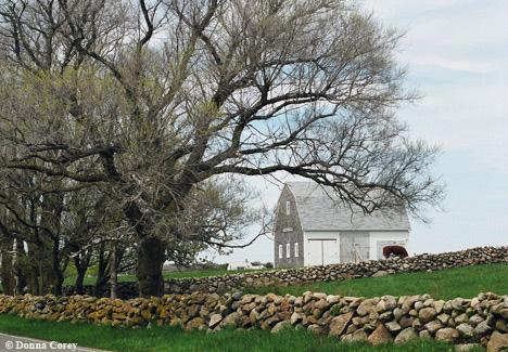 Mitchell-Farm-1.jpg