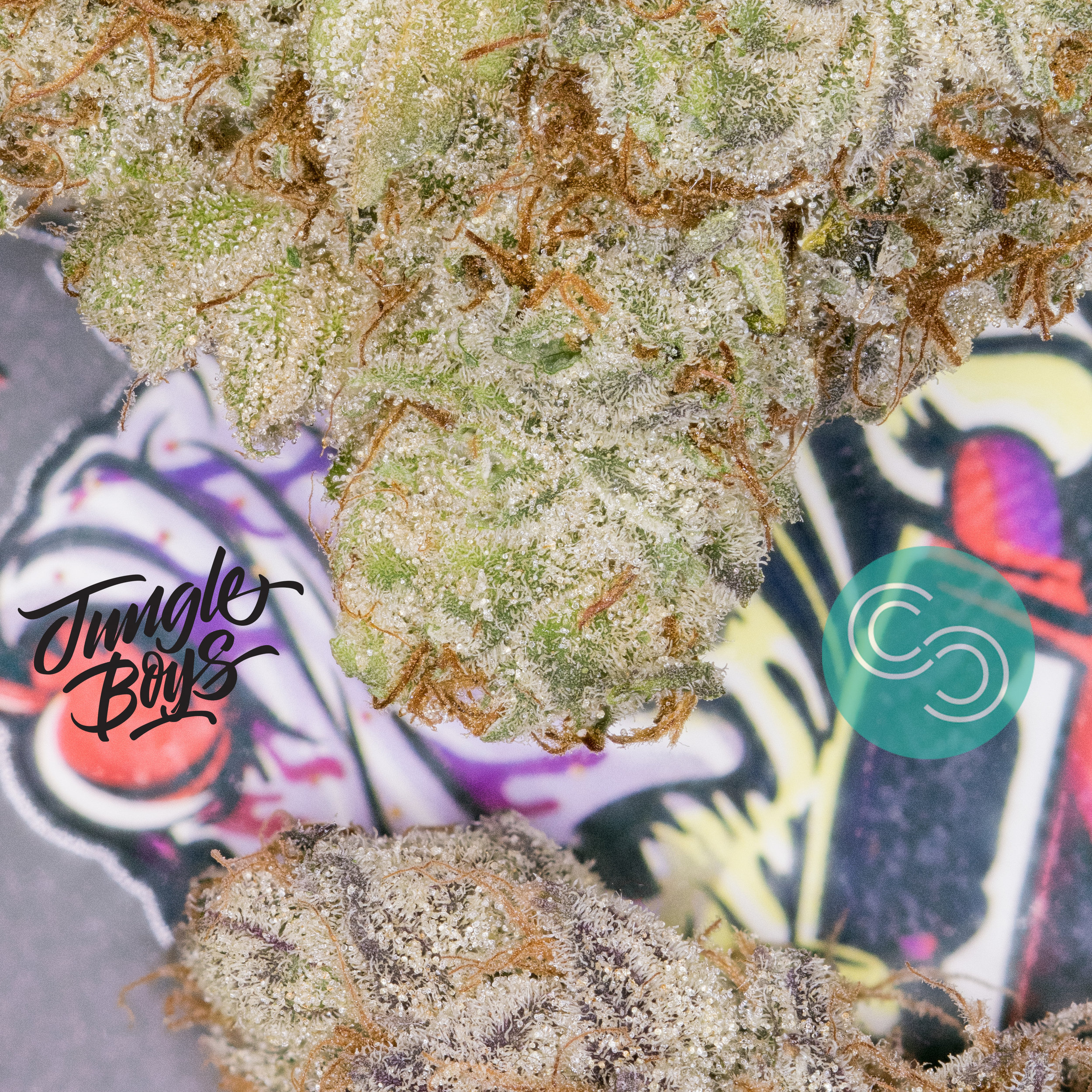 Sundae Driver phenotype #8. Each phenotype has its own respective variation of flavor & medicinal properties.