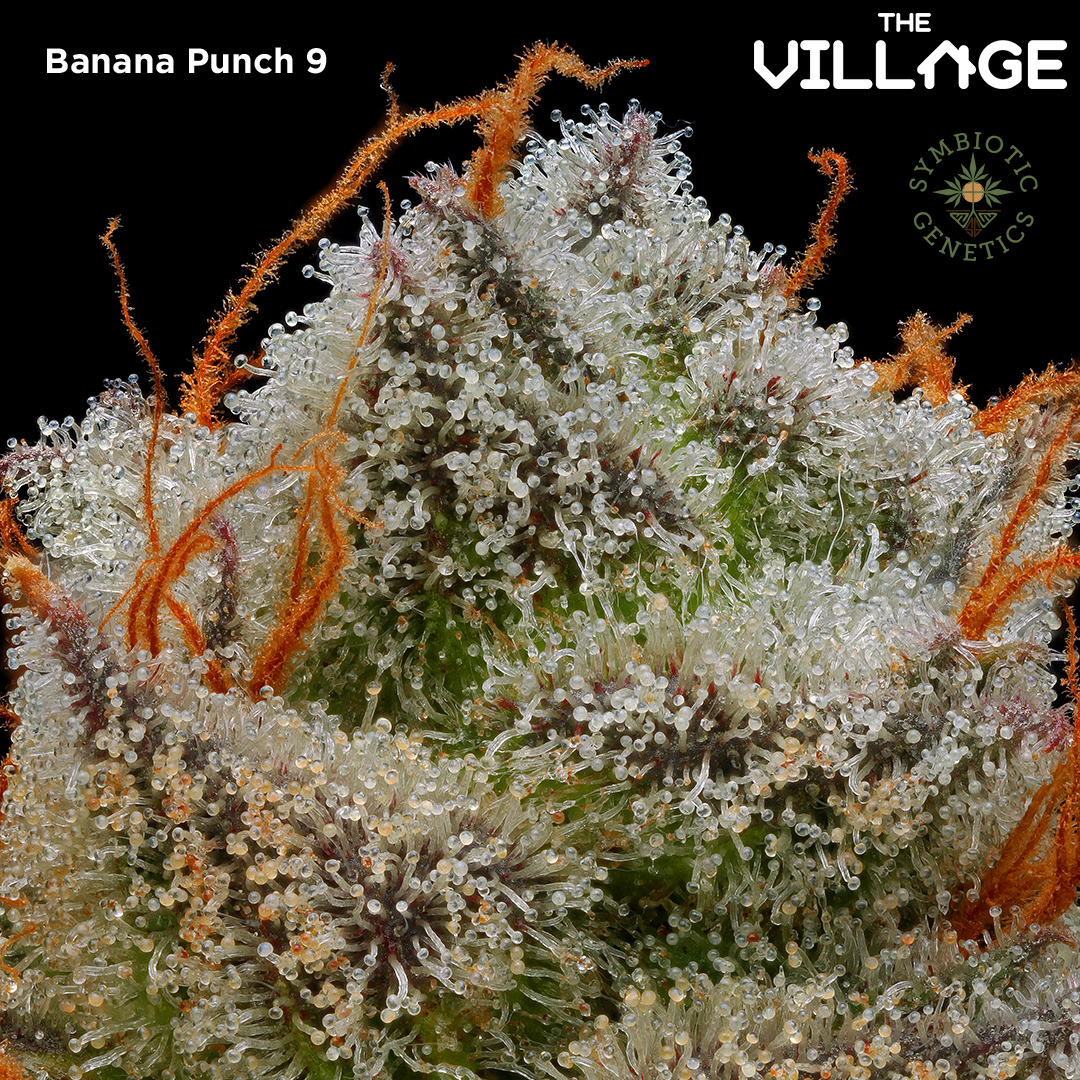 Banana-Punch-1to1-IG1.jpg