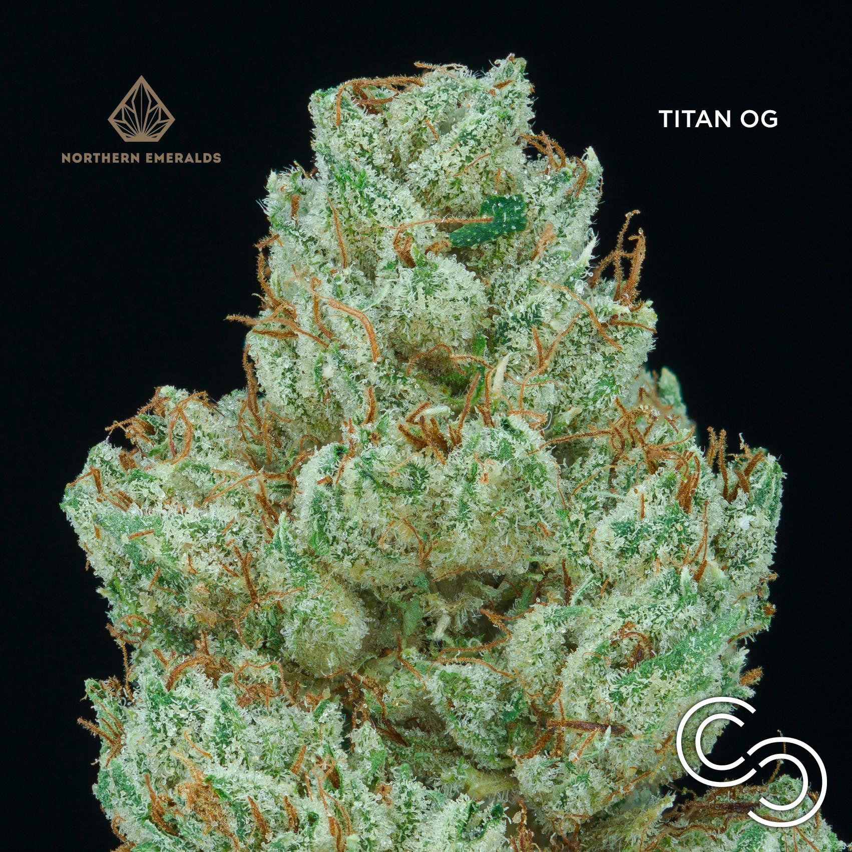titanog-sg2.jpg