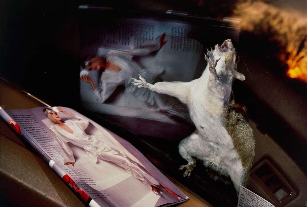 Barbara Norfleet, Eastern Gray Squirrel on Windshield