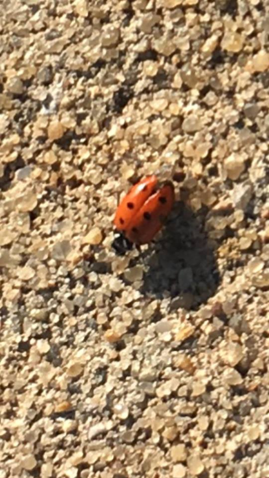 Annnnnnnnnnnnd, a ladybug as we were leaving.