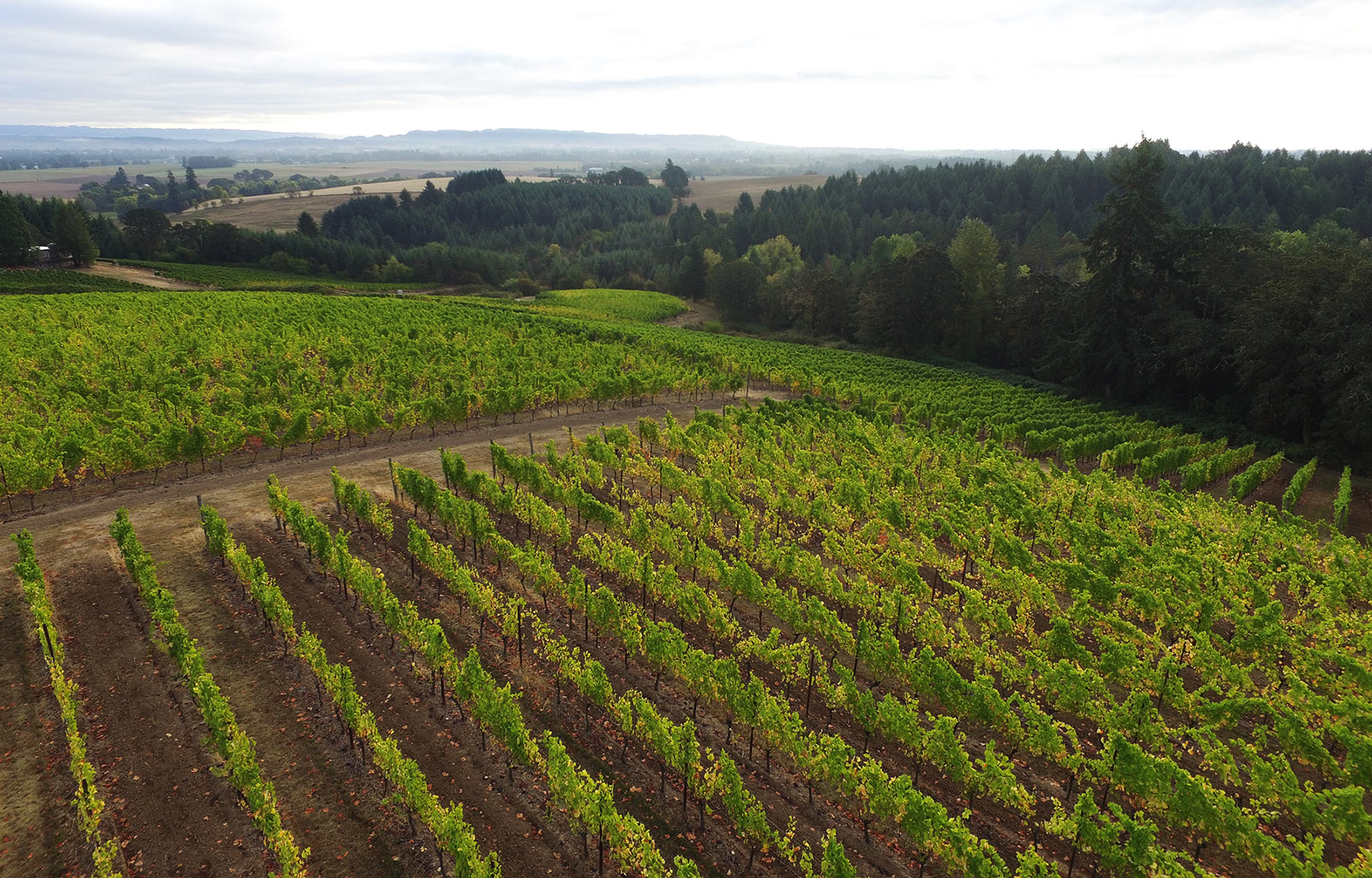 No Entrance Fees & Free Parking   Spend A Weekend In Wine Country    View Driving Directions