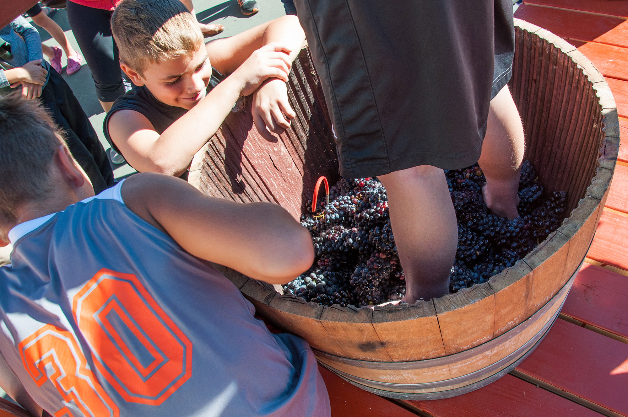 Carlton Crush Grape Stomp   Featuring the Grape Stomp Competition    Register Your Team of Four