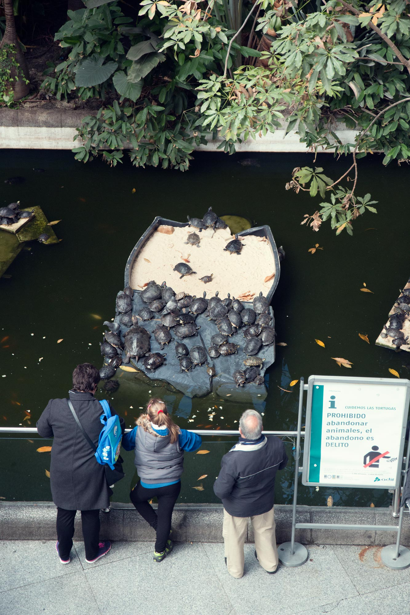 Terrapins in the Tropical Gardens at Madrid Train Station. Don't leave you're own Terrapin!