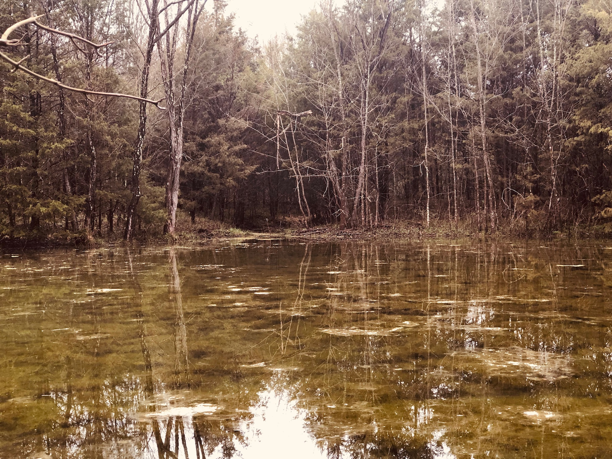 The Retreat Large Pond.jpg