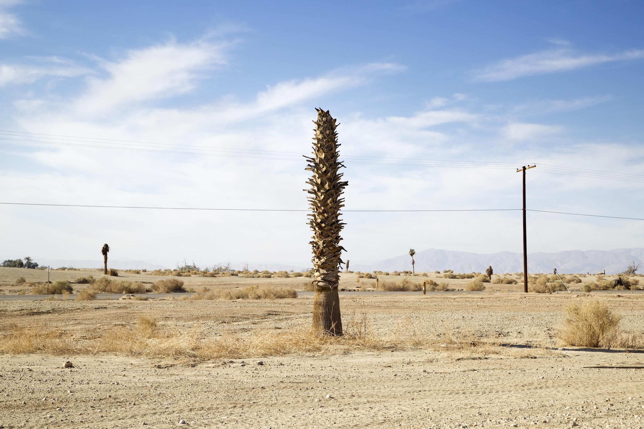 Empty Lots With Palm Tree ,  Salton Sea ,  California,  2014