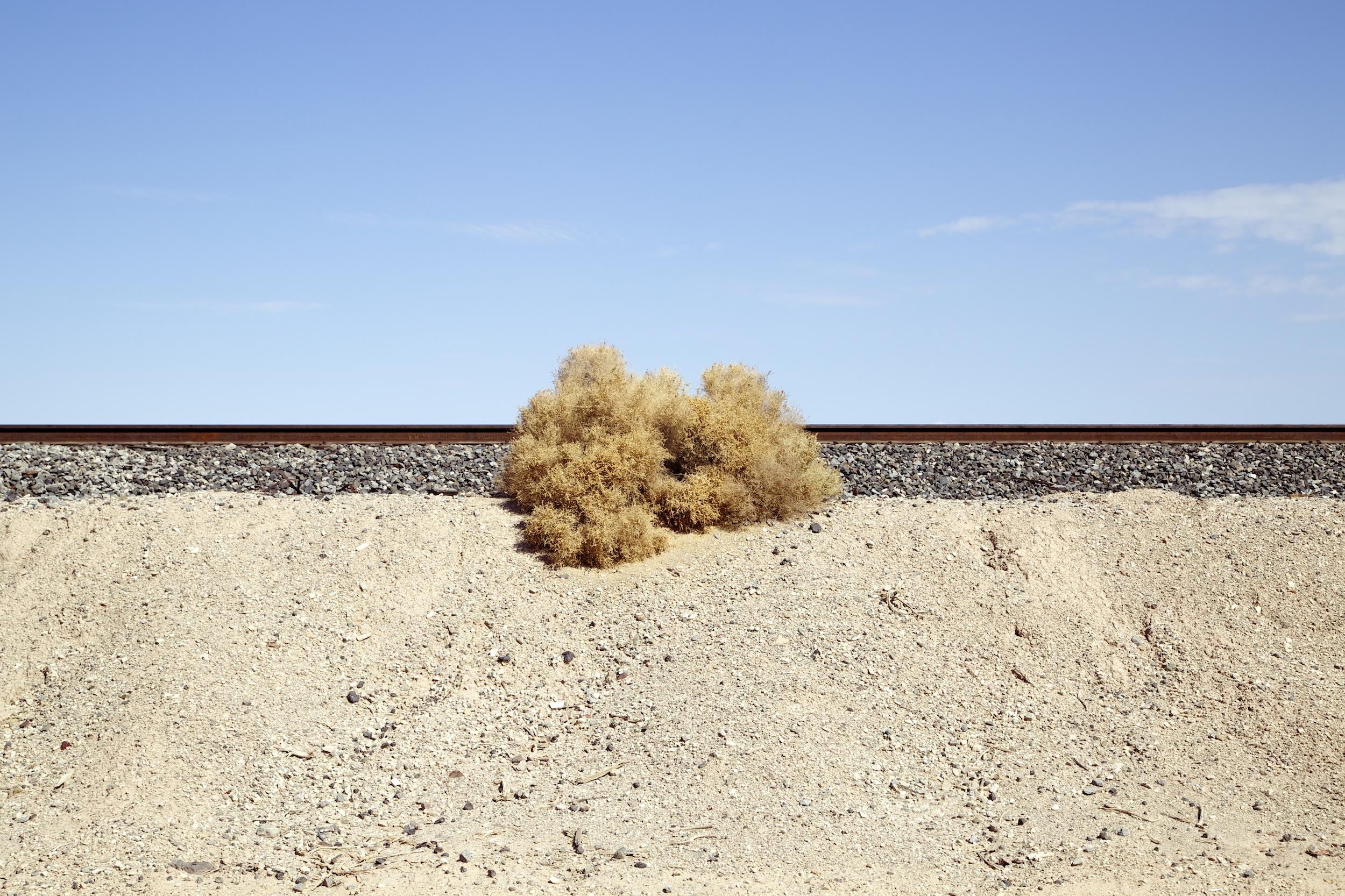 Railway Line & Salt Bush, Salton Sea, California , 2014