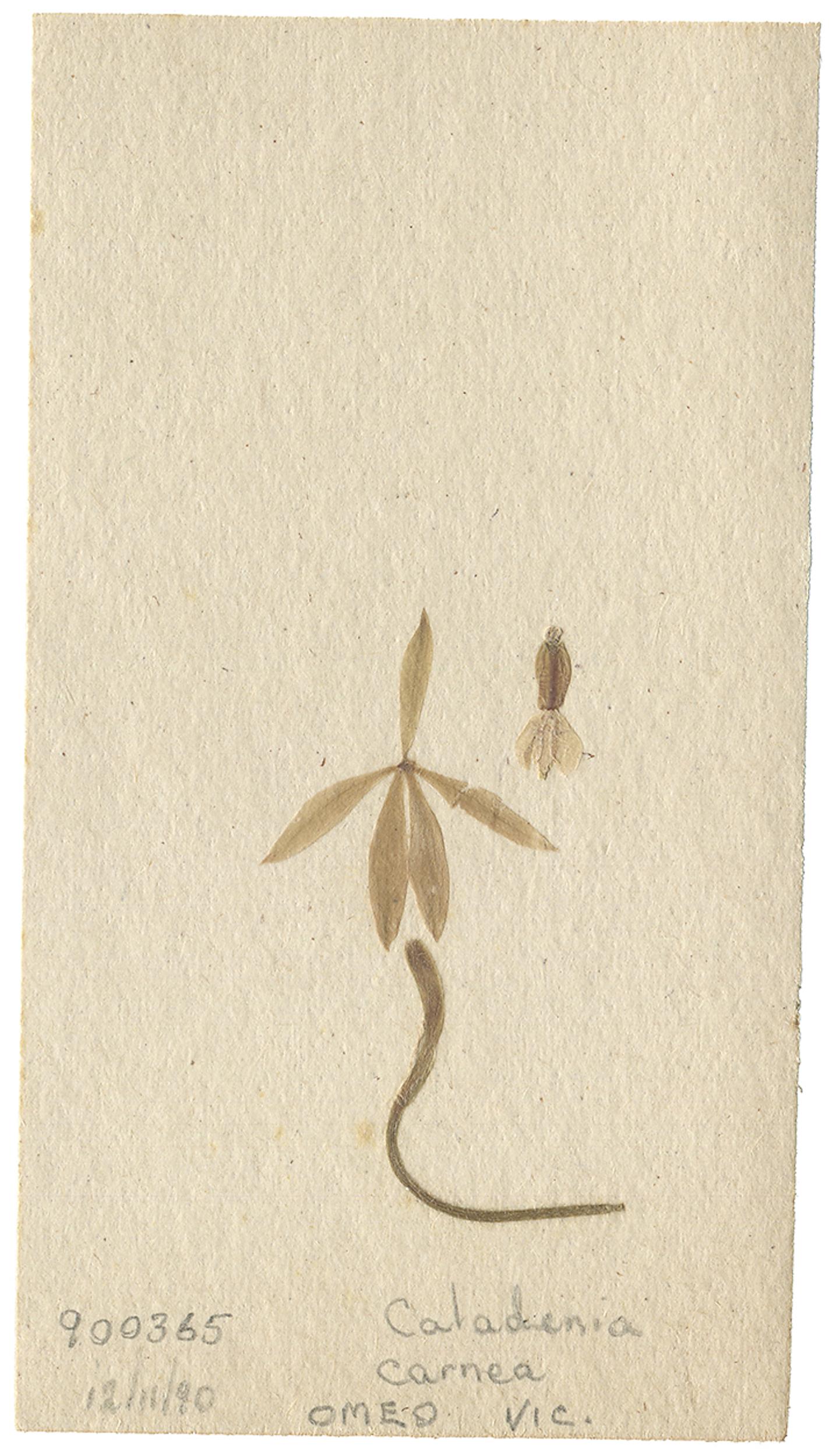 LYON 2017-06-24 Phils Orchid Specimens 200_E.jpg