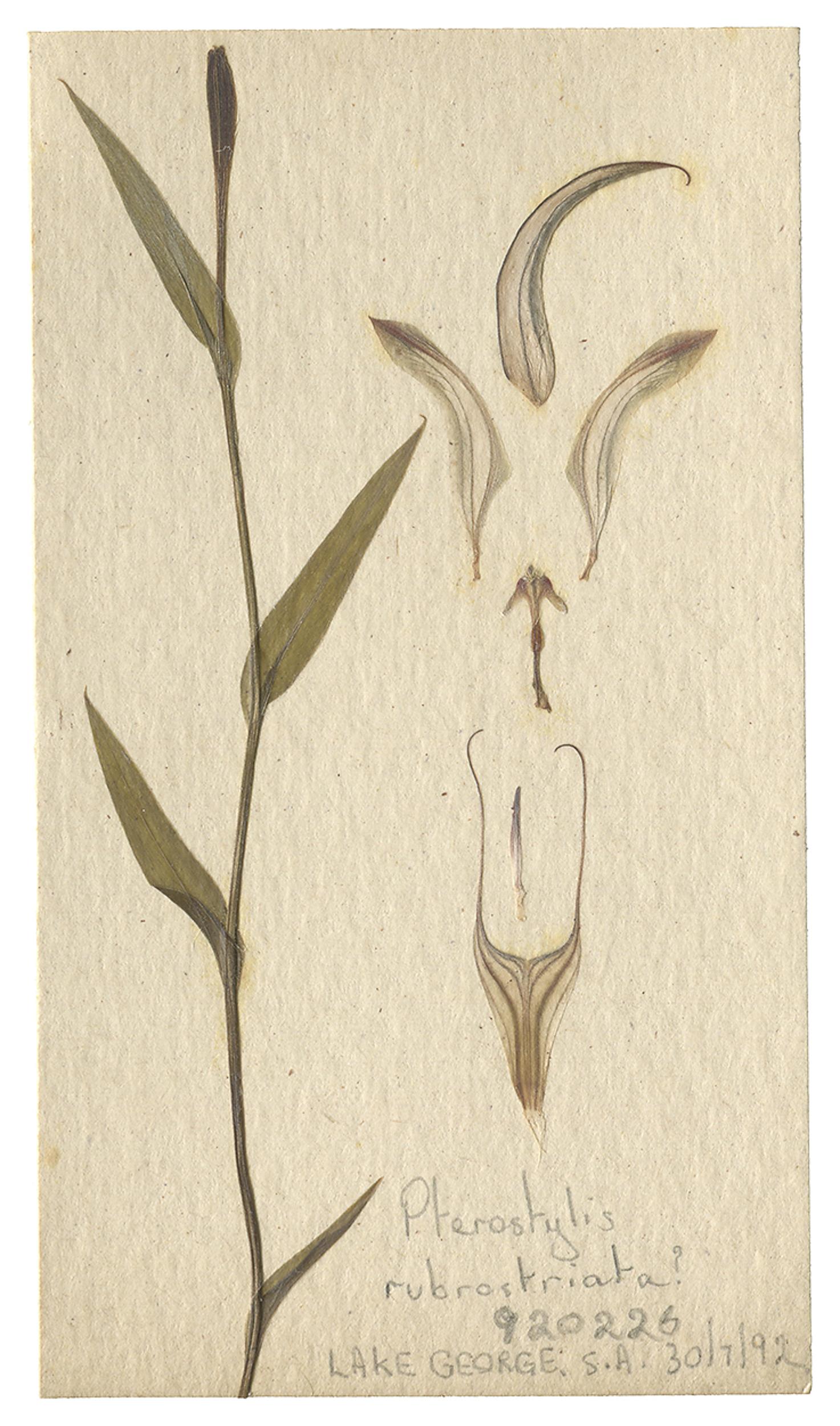 LYON 2017-06-24 Phils Orchid Specimens 262_C.jpg